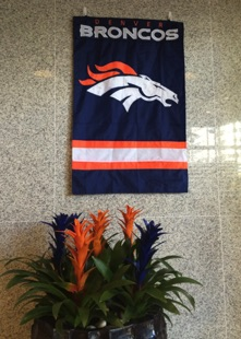 Broncos Display