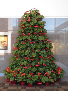 Anthurium Half Tree